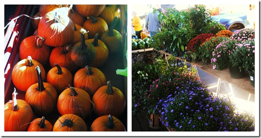 PicMonkey Collage- farmers market fall