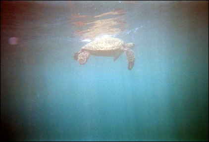 rafting- sea turtle