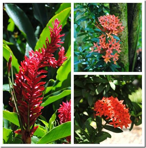 PicMonkey Collage- garden 2