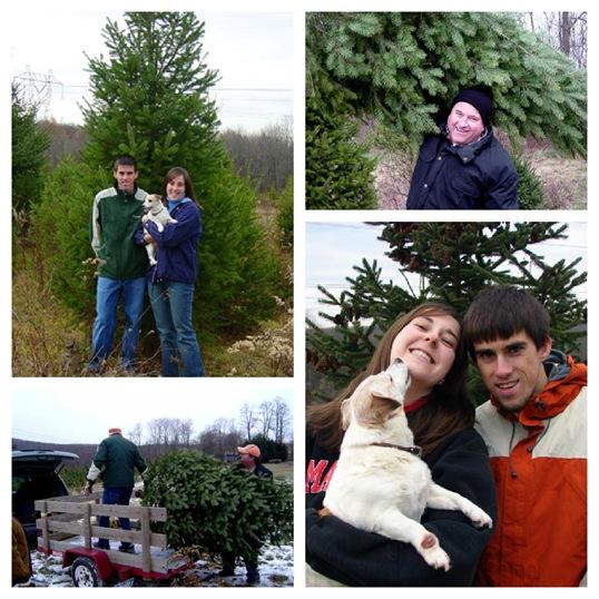 PicMonkey Collage-xmas tree