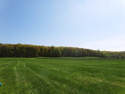 MD Horse Pasture