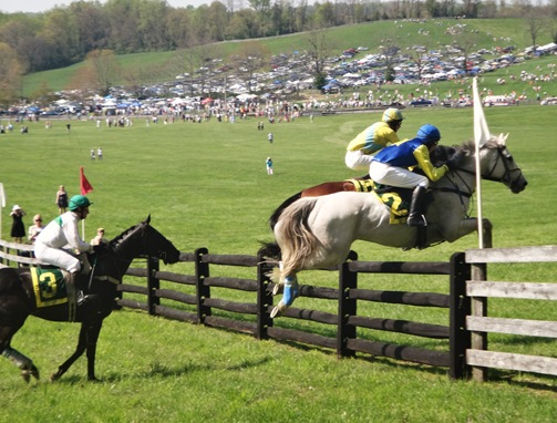 Maryland Hunt Cup horse jump