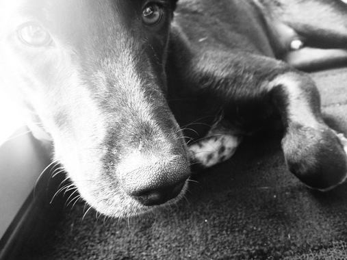 Jack close up in black and white