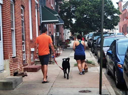 Z walking Jack and Jenna walking Chance