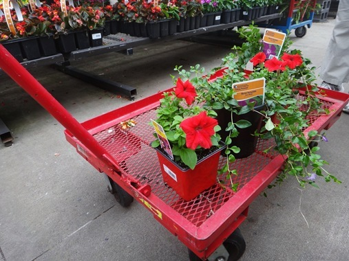 Plants for window flower boxes at Home Depot