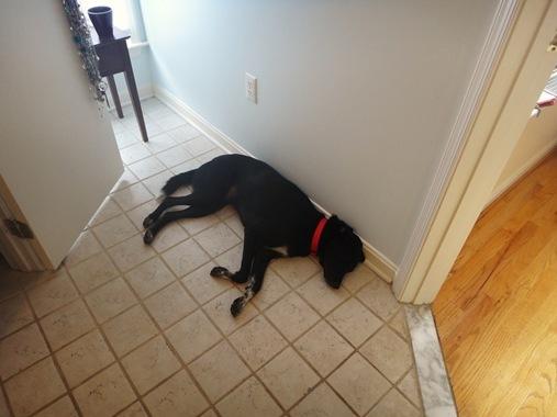 Dog asleep on bathroom floor