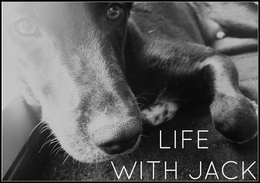 Life With Jack Logo