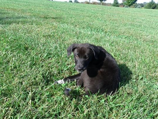 Timir as a puppy