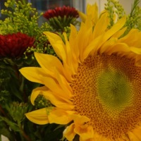 K's Faves: Fresh Flowers