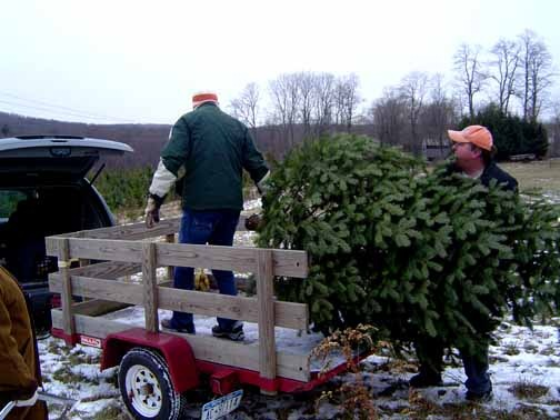 Cut your own Christmas Tree New York