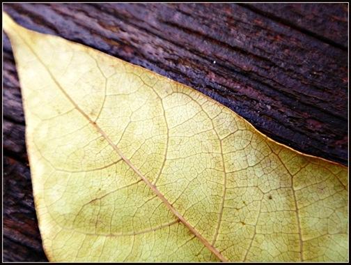25- Leafy