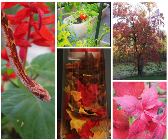 October Photo a Day Challenge the color red