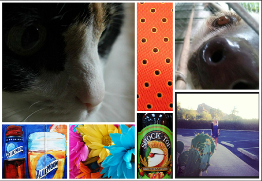 October Photo a Day Challenge close up of cat sloth tie beer flowers