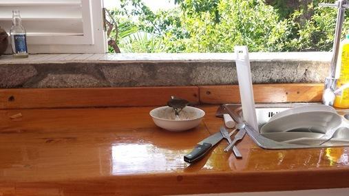 Le Gallerie Villa Soufriere St. Lucia- Bird in kitchen