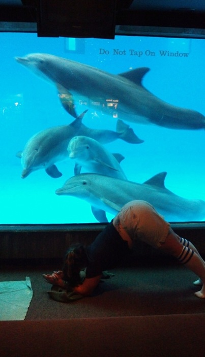 Dolphin yoga pose with dolphins