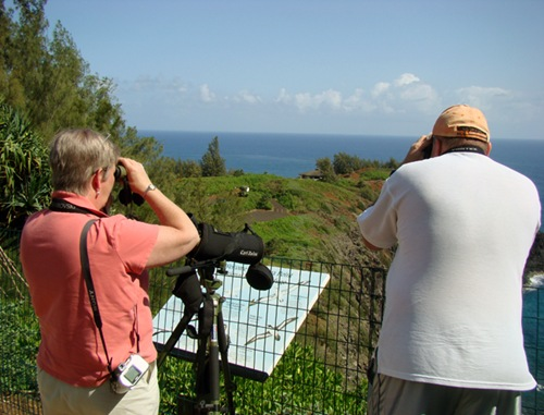 Bird watching in Kauai, Hawaii