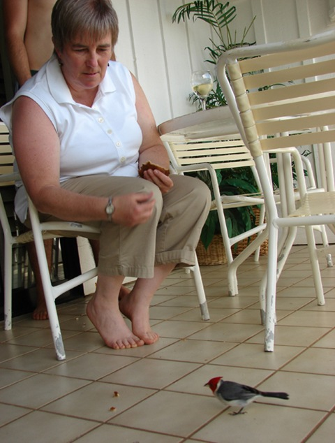 Mom feeding bird in Kaui, HI