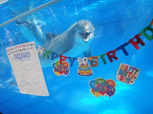 Spirit's 13th Birthday at the National Aquarium