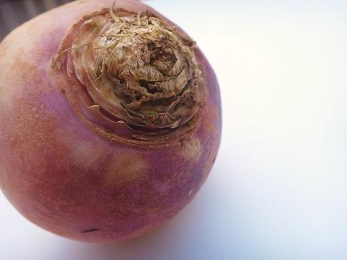 Turnip close up