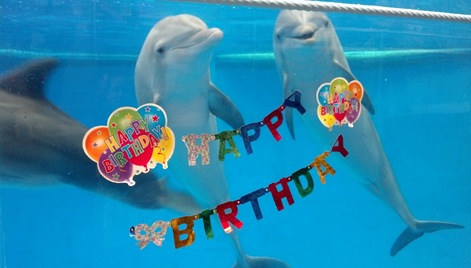 Happy Birthday Maya Dolphin