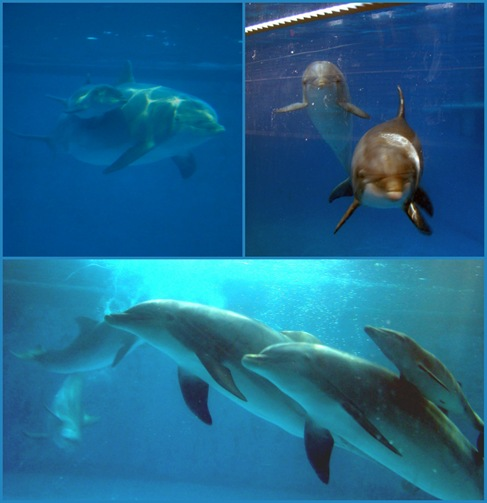 Happy Mother's Day Dolphins