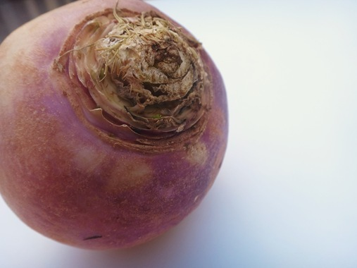 Turnip up close