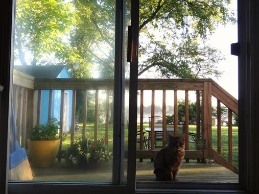 Cat by screen door