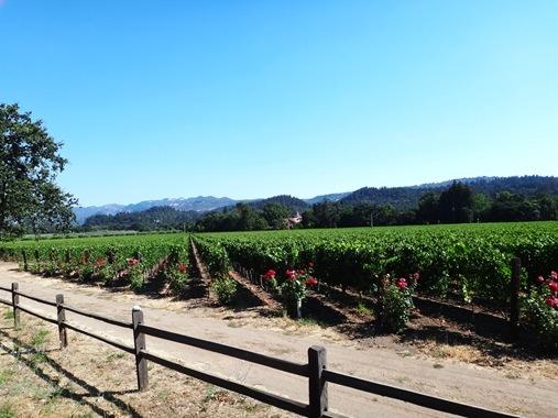K and Z CA Road Trip: Napa Vineyard