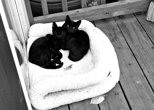 Black kittens on porch
