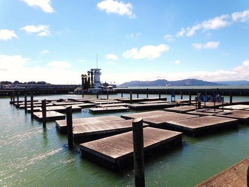 Pier 39 Sea Lions San Francisco